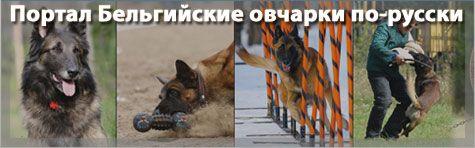 Портал Бельгийские овчарки по-русски