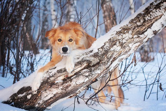 БЭСТ ОФ БЭСТ, Бордер Колли: http://agiclub.ru/agldb/dogs/best-of-best.html