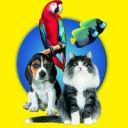Кубок Общественного Совета при Правительстве Санкт-Петербурга по вопросам отношения к домашним животным